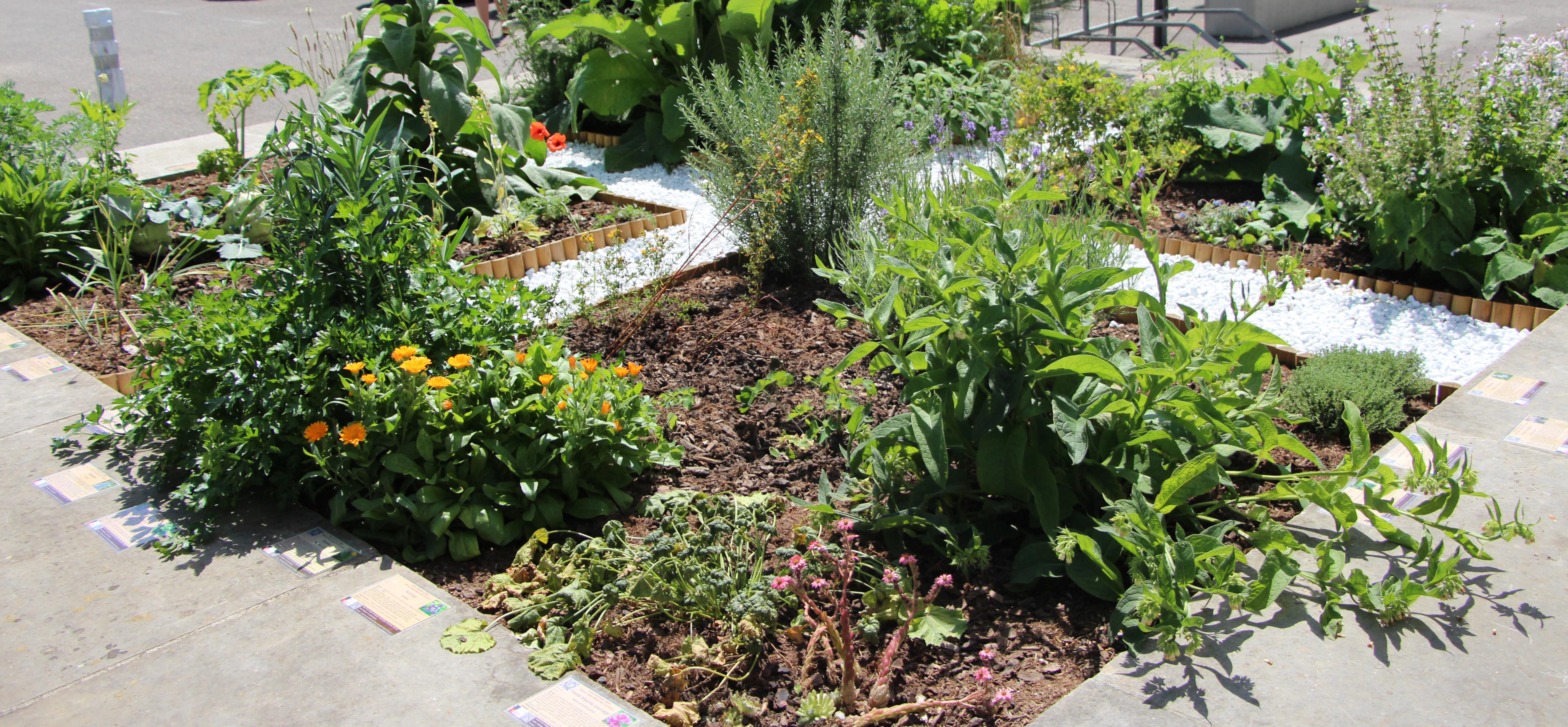 Vue du jardin médiéval des quatre humeurs - Jardin Dominique Villars - Juillet 2017