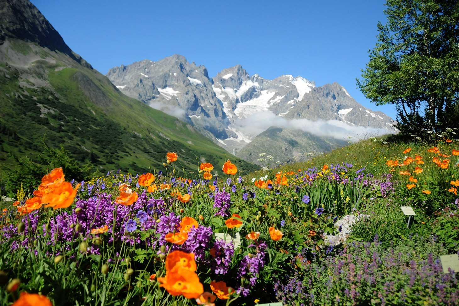 Jardin Alpin du Lautaret - UGA